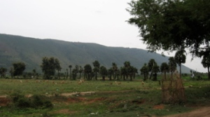 Yelagiri Hills as seen from SH18